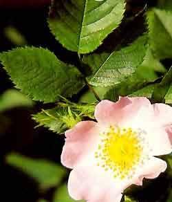 Flores de Bach en Quilmes